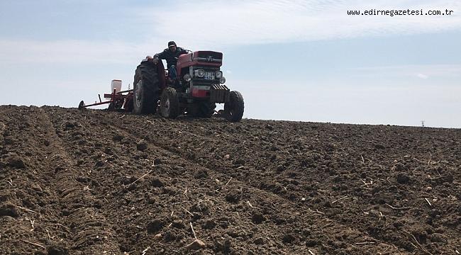 Ayçiçeği tohumları toprakla buluşuyor