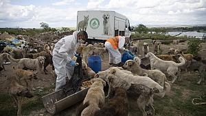 Edirne'de belediye ve hayvanseverler sokak hayvanları için seferber oldu