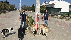 Enez'de sokak hayvanları düzenli olarak besleniyor